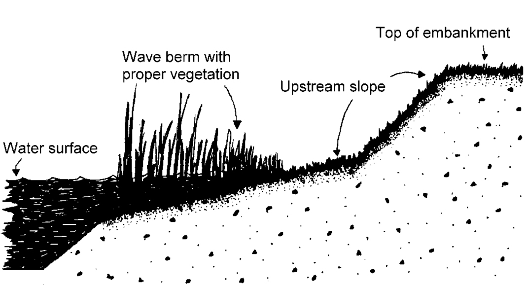 Vegetated Wave Berm Illust.jpg